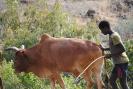 Äthiopien_6
