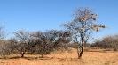 Namibia_10